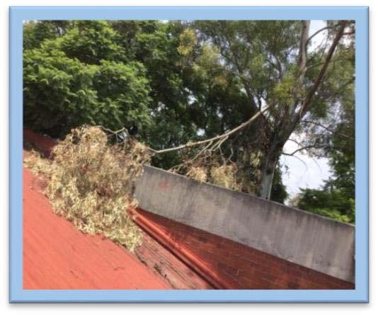 Poda de árboles que ponían en peligro la integridad de la comunidad